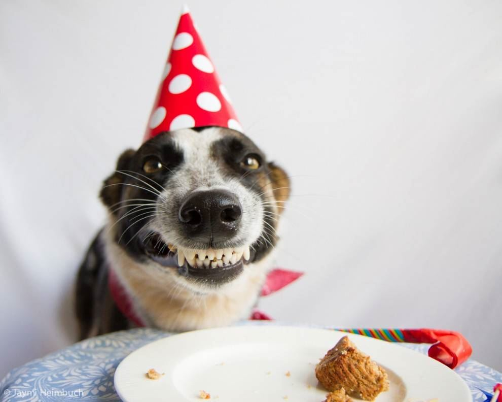 Your Dog Park Is Turning 2 Years Old Join Us For Birthday Cake Celebration Activities As We Commemorate The Second Anniversary Of Toledos First